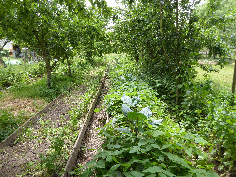 ralisation tout en ayant une vision globale et raliste de la permaculture grce la dcouverte du lieu de production amnag par patrick et magali - Jardin Permaculture